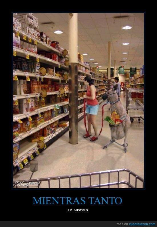 australia,canguro,supermercado
