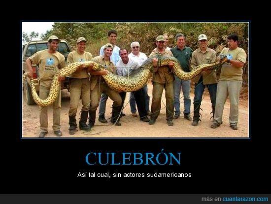 culebra,culebron,serpiente