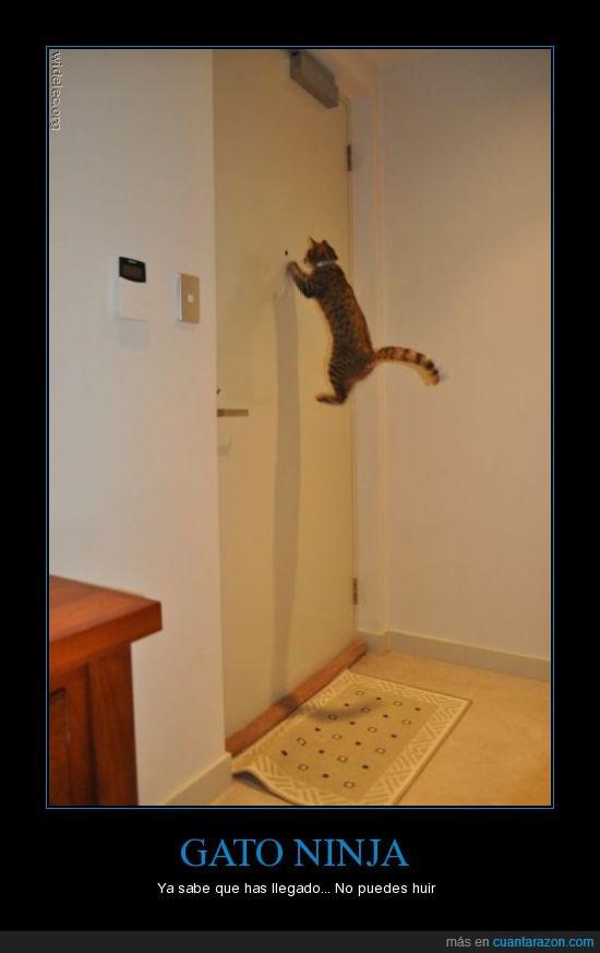 gato ninja,guardian,mirilla,puerta,vigilancia