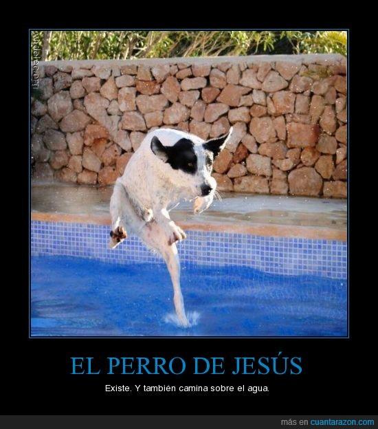 agua,caminar,flotar,jesus,perro