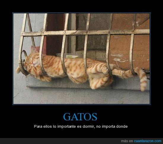 dormir,gato,lugar
