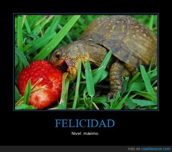 felicidad,fresa,tortuga