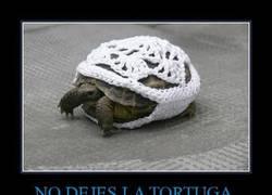 Enlace a NO DEJES LA TORTUGA