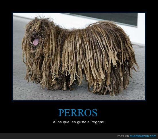 pelo,perro,rasta