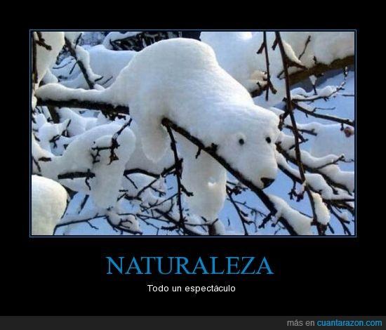 espectáculo.,Naturaleza,oso