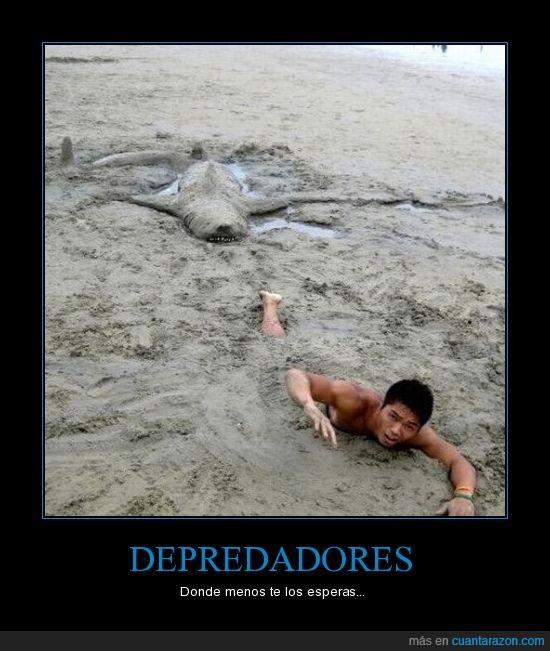 depredadores,tiburon