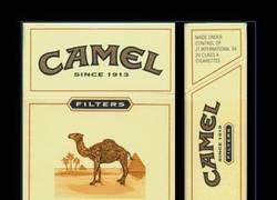 Enlace a CAMEL