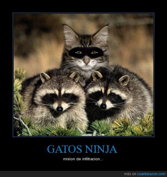 gato,mapache