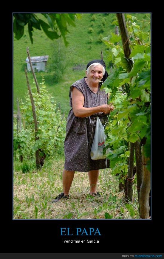 papa,señora,viñas
