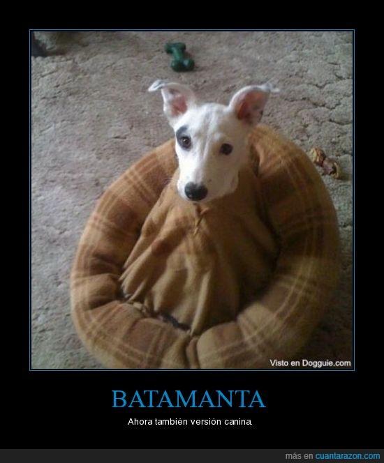 batamanta,fail,perro