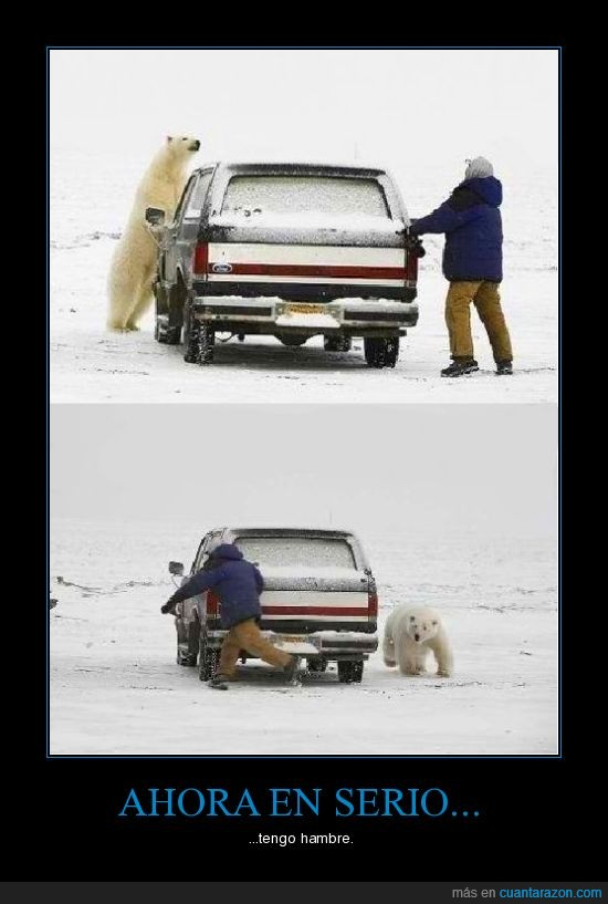 coche,hambre,hielo,oso