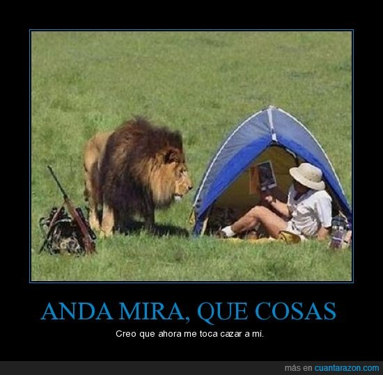 animal,leon,win