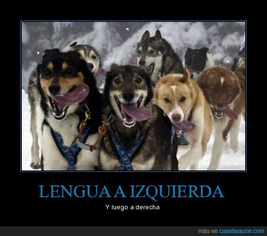 lengua,perros,trineo
