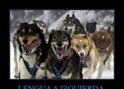 Enlace a LENGUA A IZQUIERDA