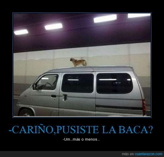 baca,circulando,coche,perro