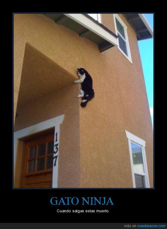 casa,gato,ninja,pared