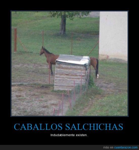 caballo,carrera,humor,salchicha