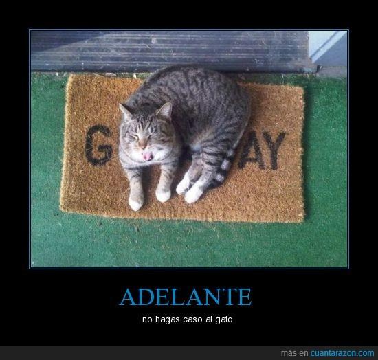 casa,entrada,felpudo,gato