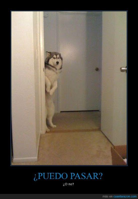 perro de pie puedo pasar habitacion