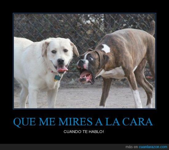 chucho,gritar,perros