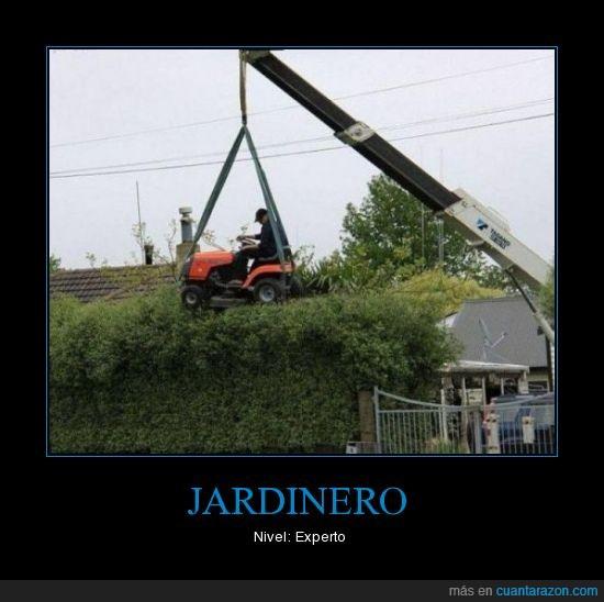 experto,grua,jardinero,nivel,podar
