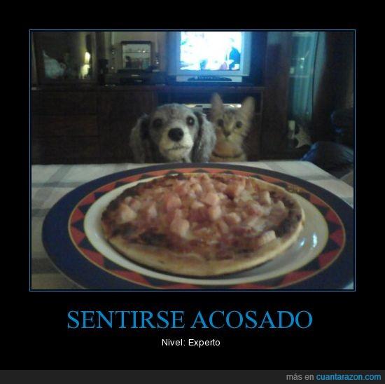 acosando,gato,perro,pizza