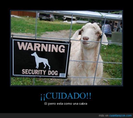 cabra,cuidado,perro
