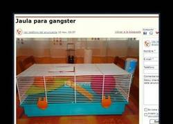 Enlace a GANGSTERS