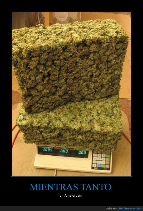 amsterdam,fumar,maria,marihuana,porros