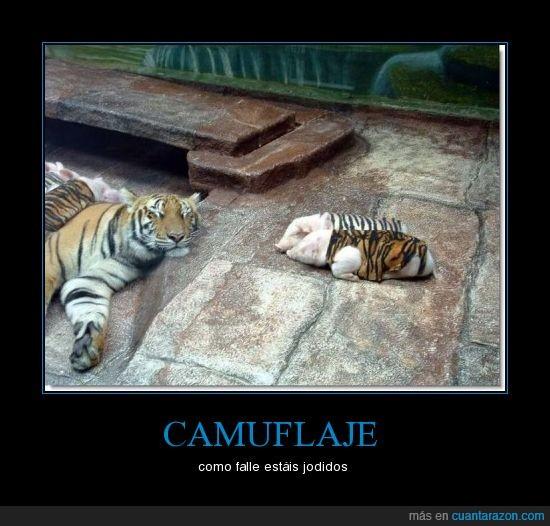 camuflaje,cerdo,tigre