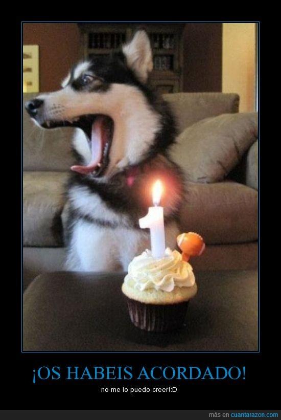 cumpleaños,husky,perro,tarta