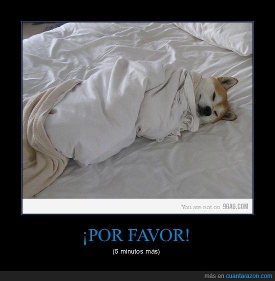 dormir,más,pereza,perro