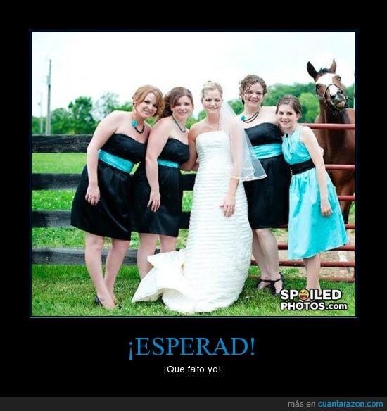 boda,caballo,foto