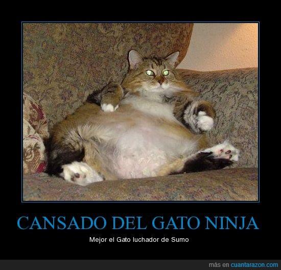 epic,gato,gordo,ninja