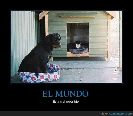casa,gato,perro