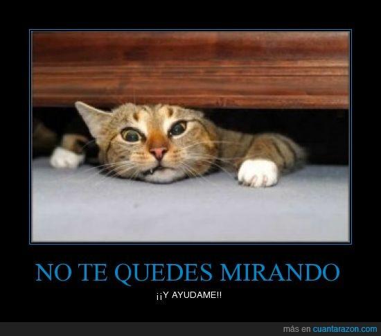gato,puerta