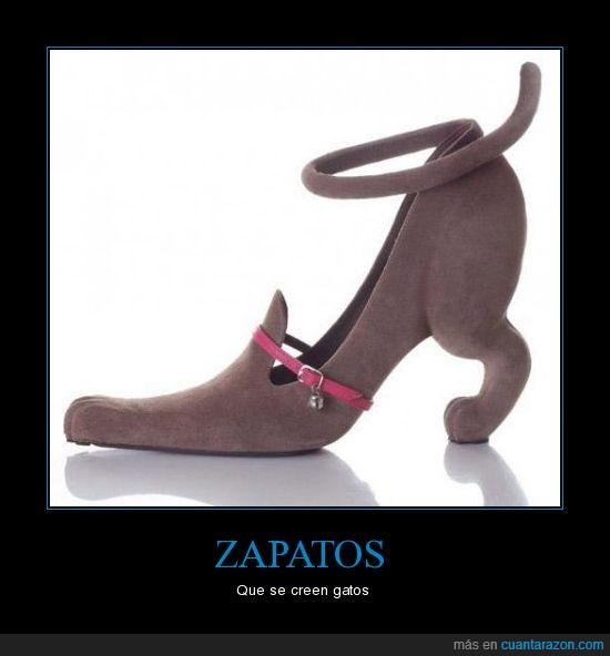 gatos,Zapatos
