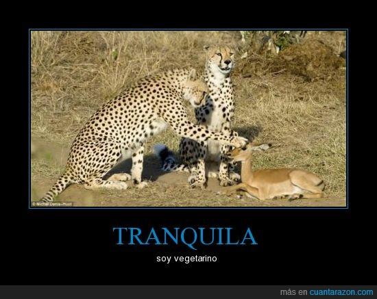 animales,cervatillo,guepardo