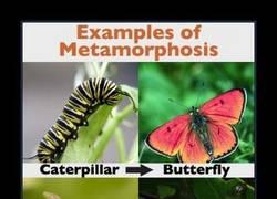 Enlace a METAMORFOSIS