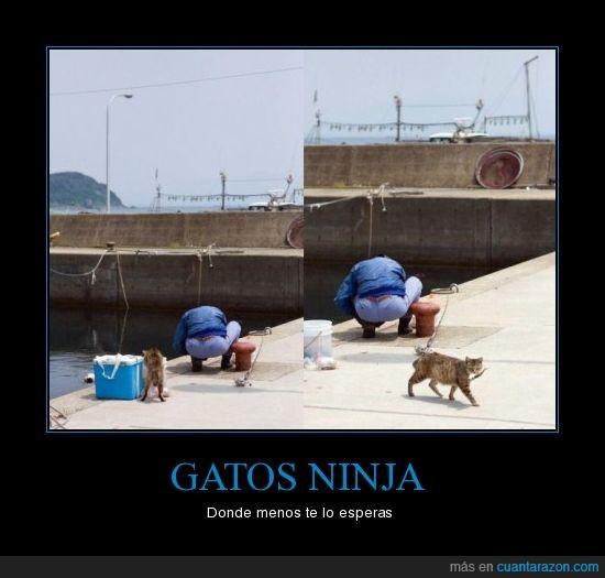 feel,gato,like,ninja