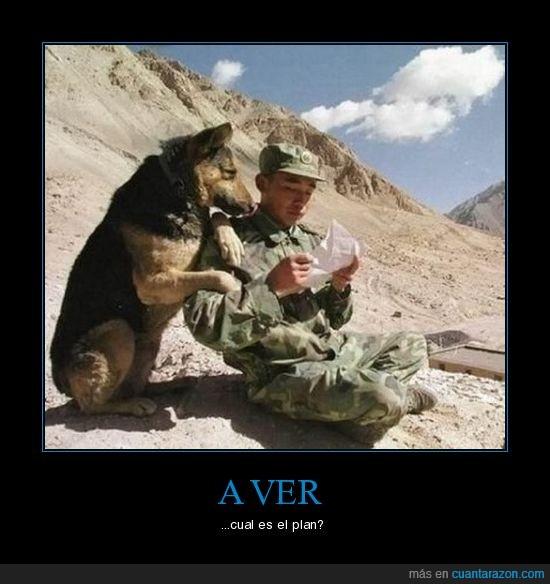 montañas,perro,plan,soldado