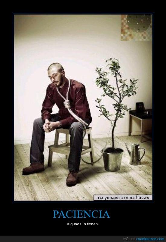 bonsai,suicidio
