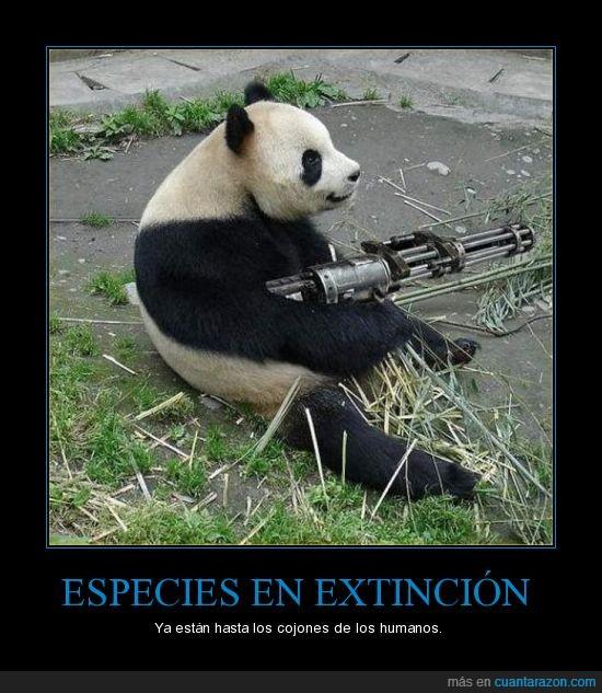 extincion,oso,panda,selva