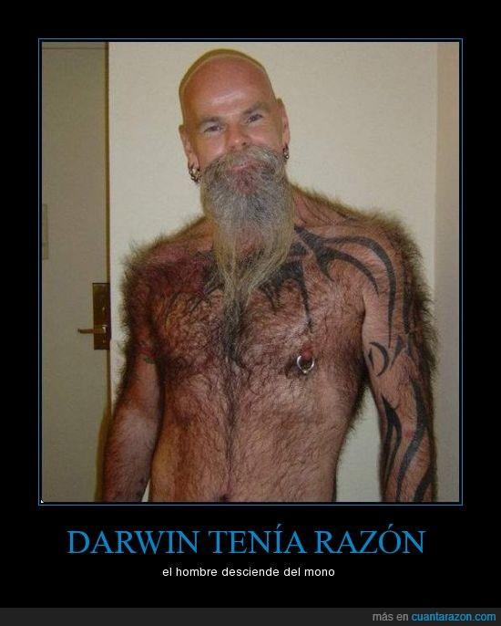 darwin,hombre,mono,peludo