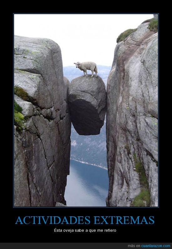 actividades,extremo,oveja