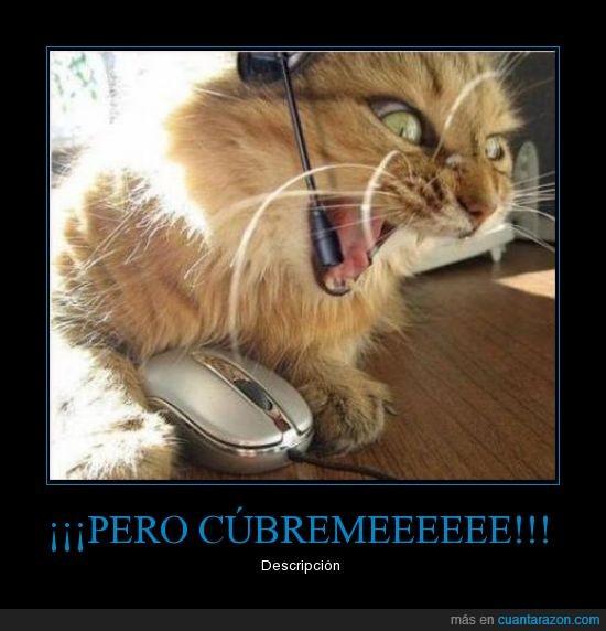 gato,jugando,ordenador,pc,wow