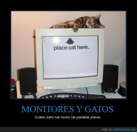 dormir,gato,monitor