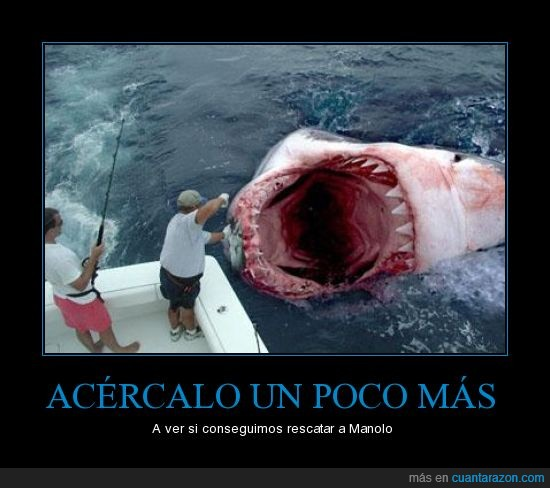 boca,comida,mar,tiburon