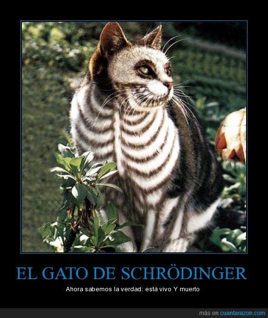física,gato
