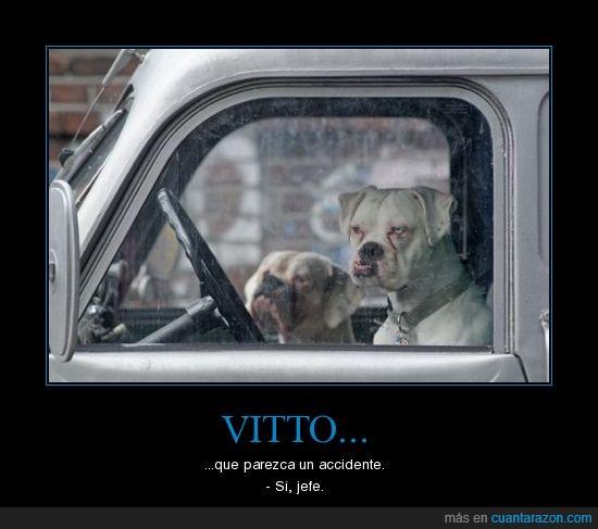 coche,mafia,Perro,vitto